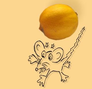 Buch veröffentlicht: Die Maus, die im Türstock krabbelt